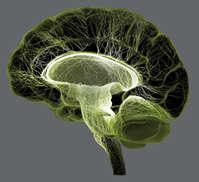 Brain weed